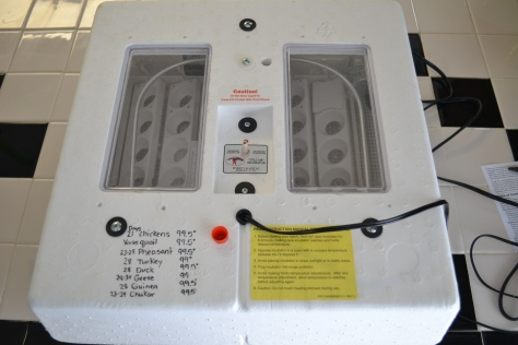 Little Giant Incubator